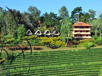 Laulee Hill Resort