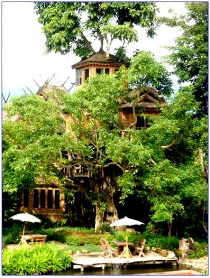 Pai Tree House