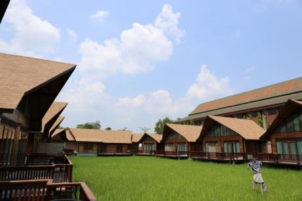 Rice Farm Resort