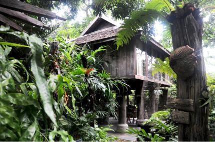 Fern Paradise Chiang Mai